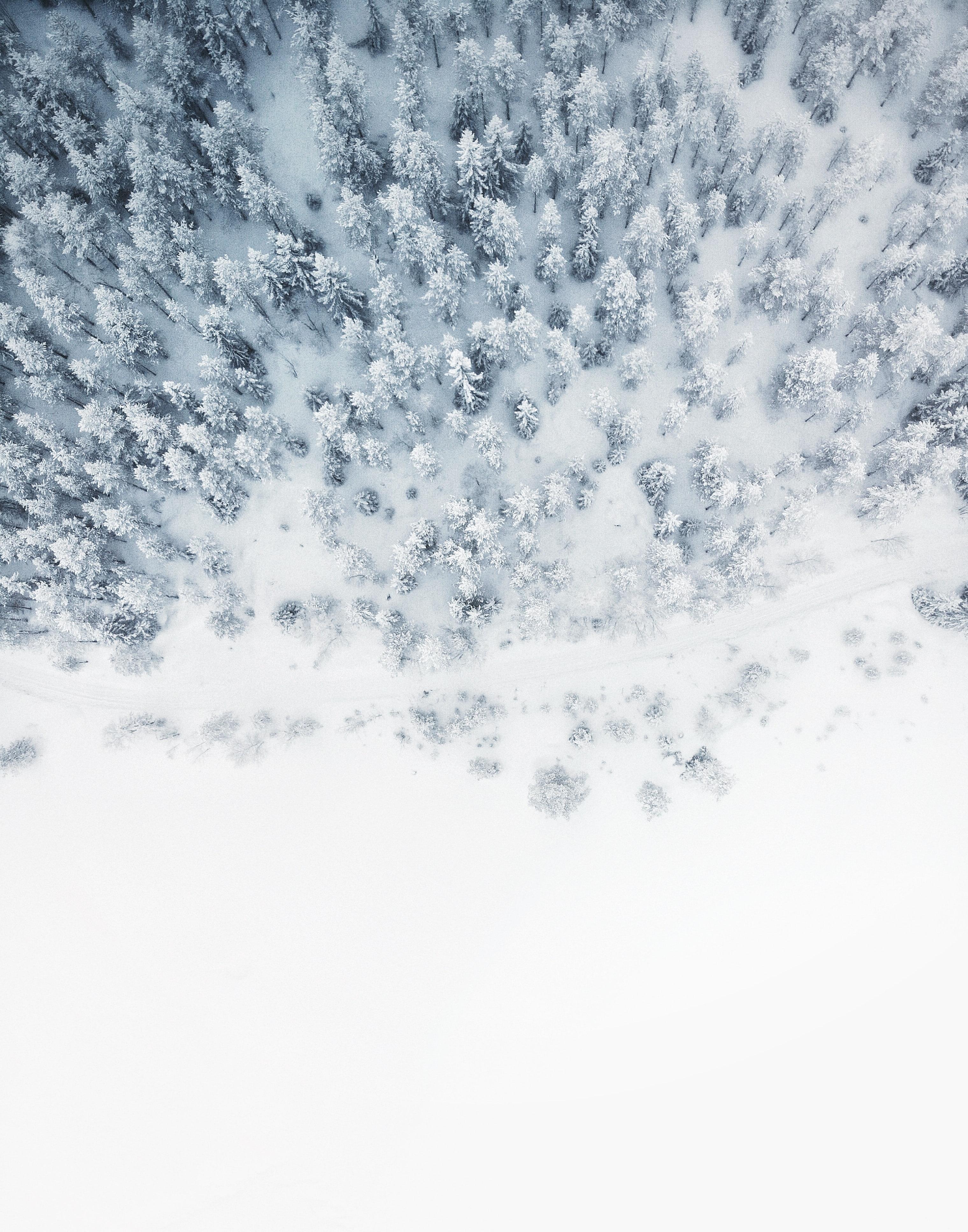 Photo d'une forêt enneigée