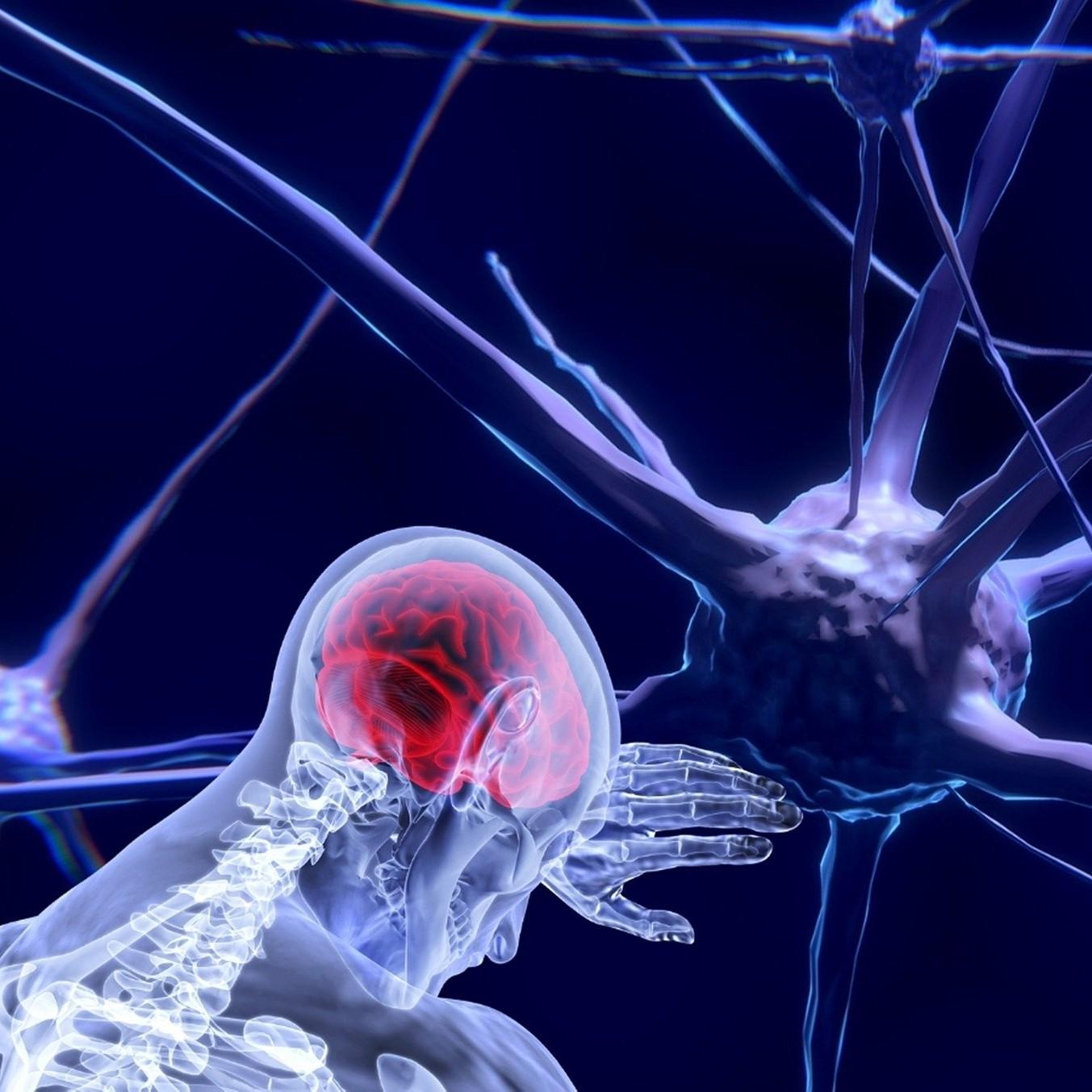 Illustration représentant un corps humain au travers duquel transparaît son organe cerebral.