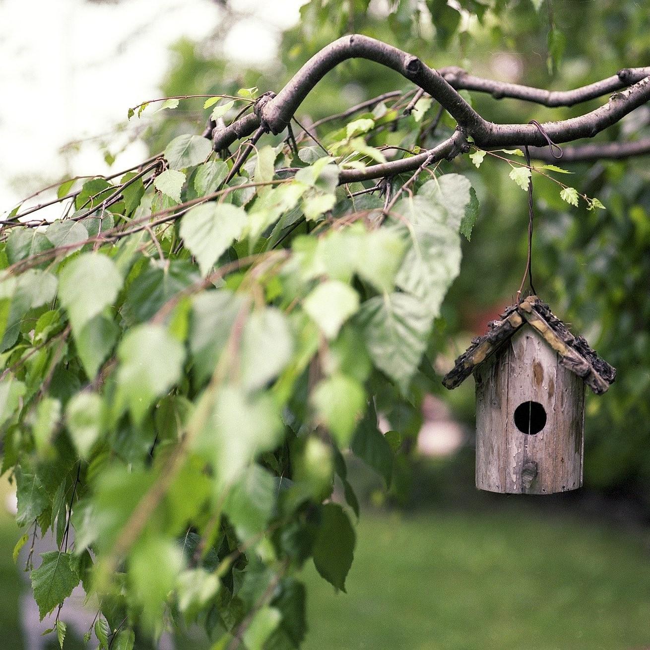Photographie d'une branche d'arbre sur laquelle est suspendu une maison pour oiseaux en bois