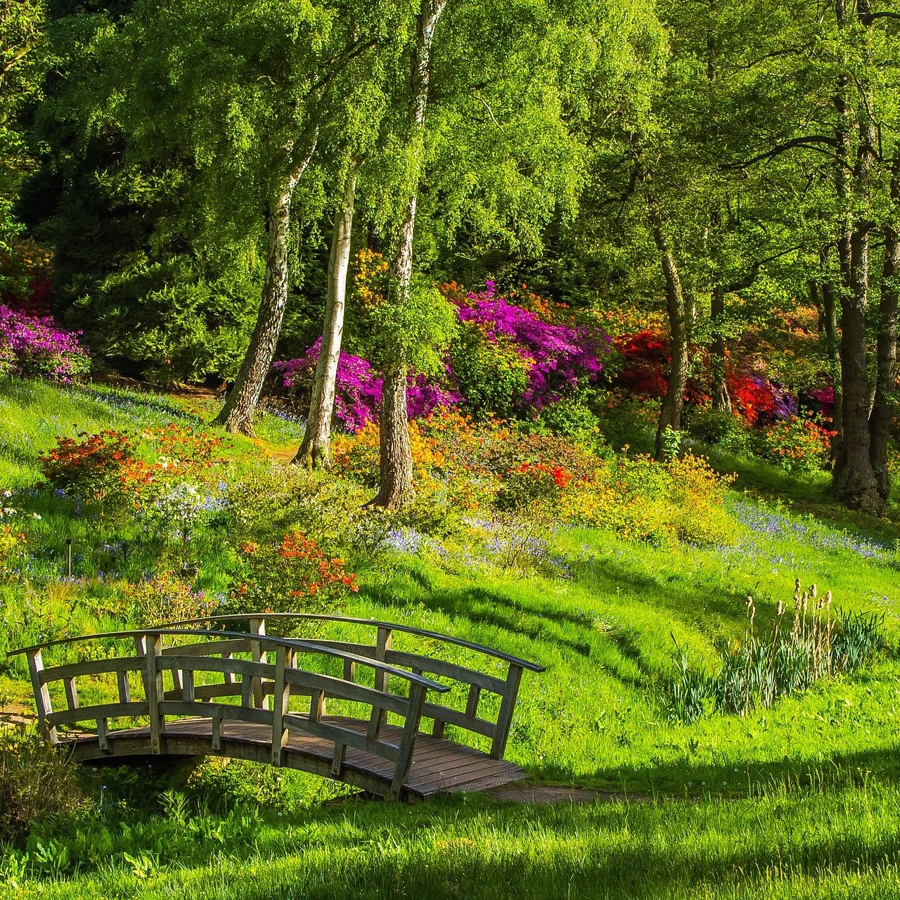 Photographie d'un parc verdoyant dans lequel il y a un petit pond en bois