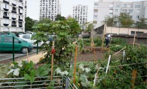 Jardiner bio au pied des tours HLM