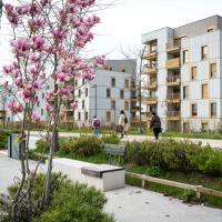 Photographie d'un magnolia planté dans un quartier résidentiel
